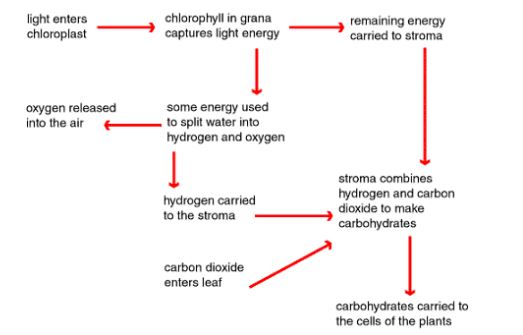 Biology Questions and Answers Form 1 - Biology Quizzes