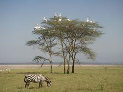 Kenya Volunteers Project 1