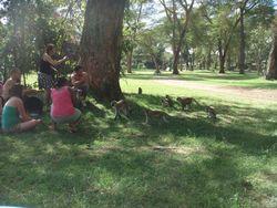 Kenya Volunteers Project 39