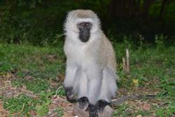 Mara Animals