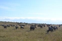 Masai Mara Graassland