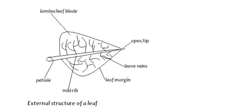 biology notes form 1 pdf