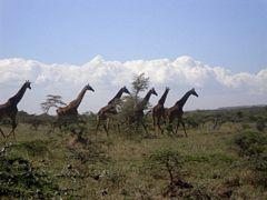 Kate Masai