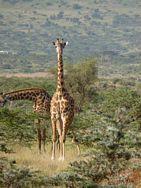 Vesna Masai 3