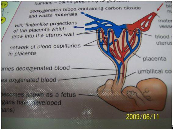 Biology Questions and Answers Form 3 - High School Biology Tests/Exams