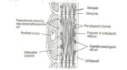 Biology Questions and Answers Form 2 - High School Biology