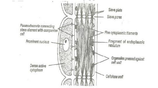 biology questions and answers form 2