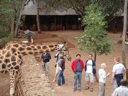 Volunteer Africa Giraffe Excursions 1